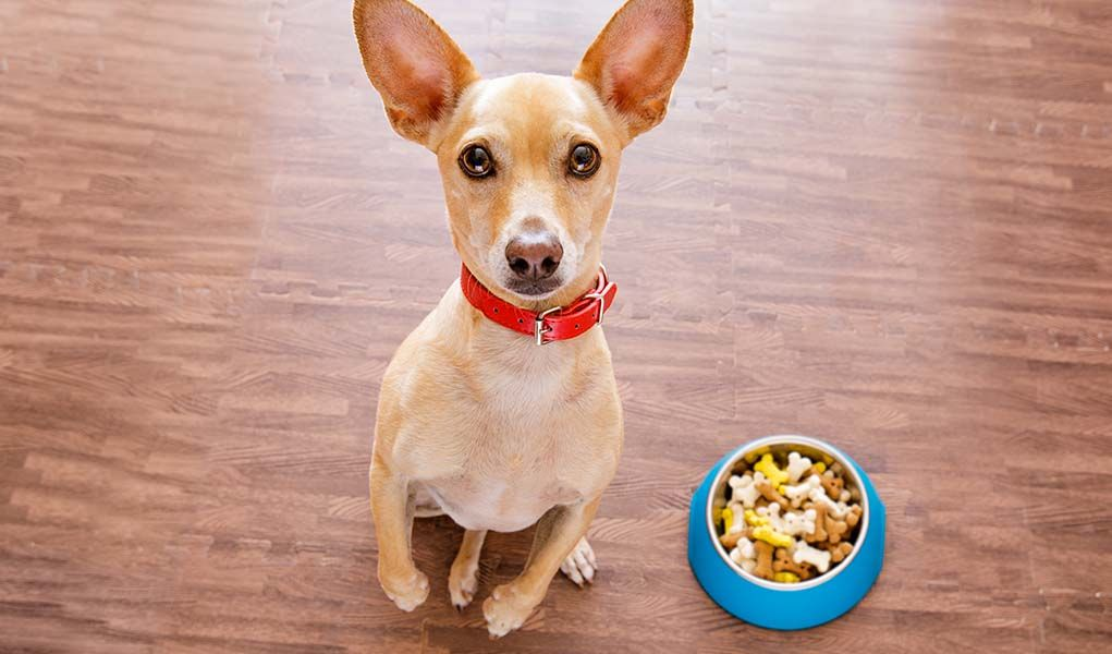 9 Vet Recommended Foods For Chihuahuas Dog Food Recipes Dog