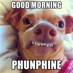 Good Morning Phunphine Tap To See More Of The Funniest Morning Memes To Share On Facebook Mobile9 Good Night Funny Funny Animal Quotes Funny Dog Memes