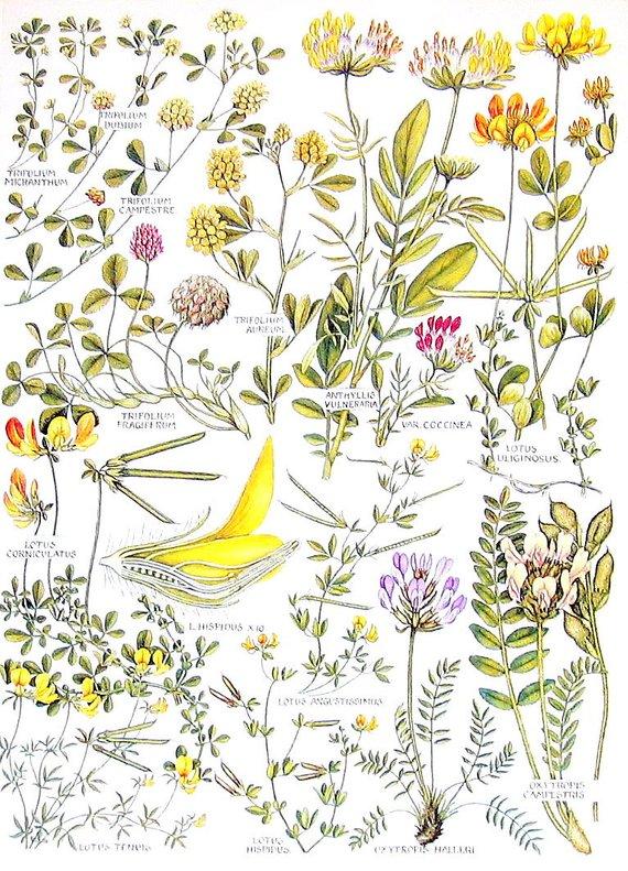 Peppermint Vintage Botanical Floral Illustration Art Poster 24x36