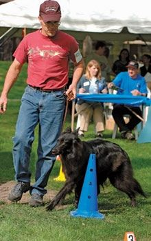 Teaching Your Dog Obedience And Rally O Dog Training Training