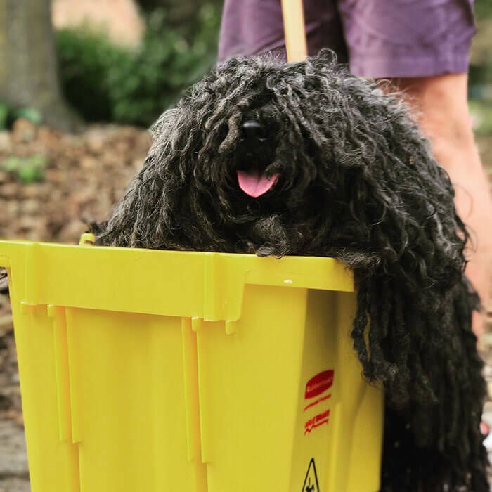 This Dog Joined The Annual Mainstrasse Paw Rade Dressed As A Mop