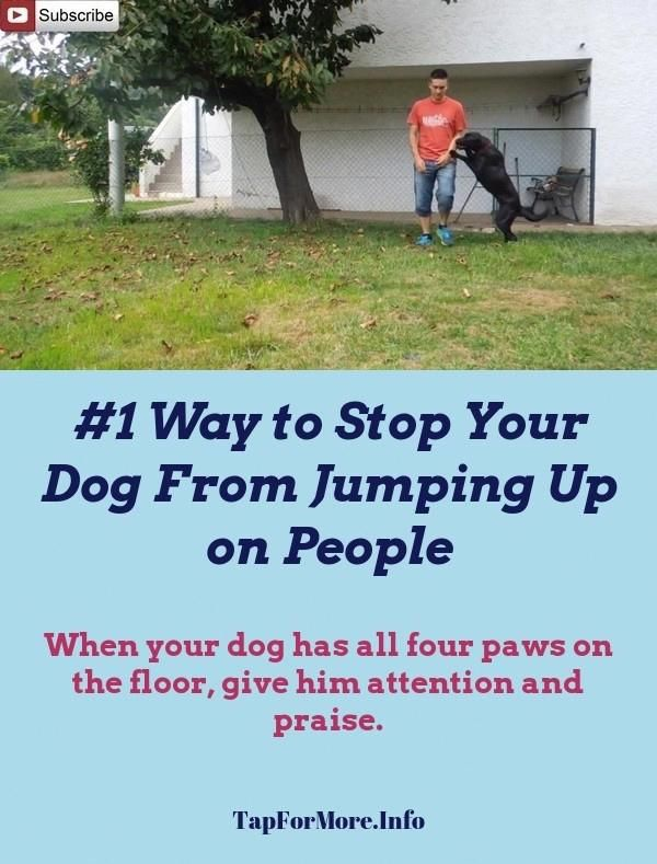 Stop Dog Jumping And How To Get My Dog To Stop Barking Check The