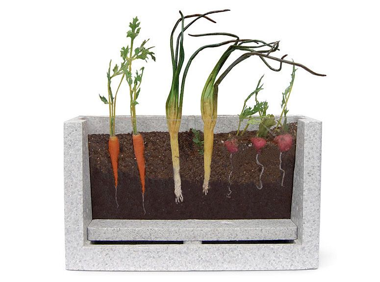 Very clever viewable Root Veggie garden 2792 httpwicked