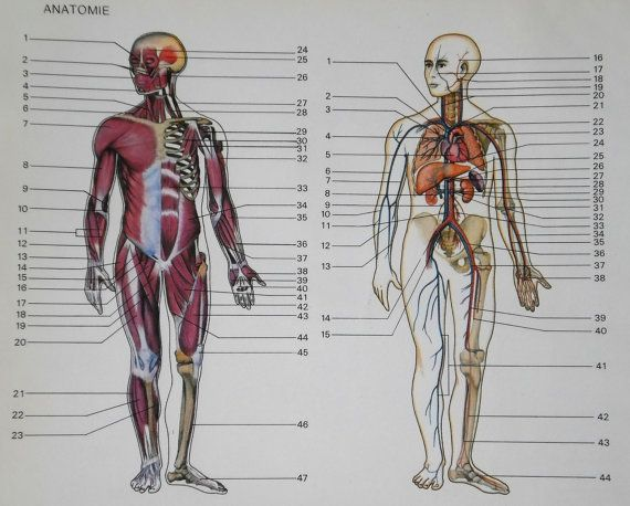 French Anatomy Book Plates, Vintage Scientific Diagram of Body Systems. Medical Collage Pack, for Mixed Media, or Altered Art projects & Assemblages. Colored Plates