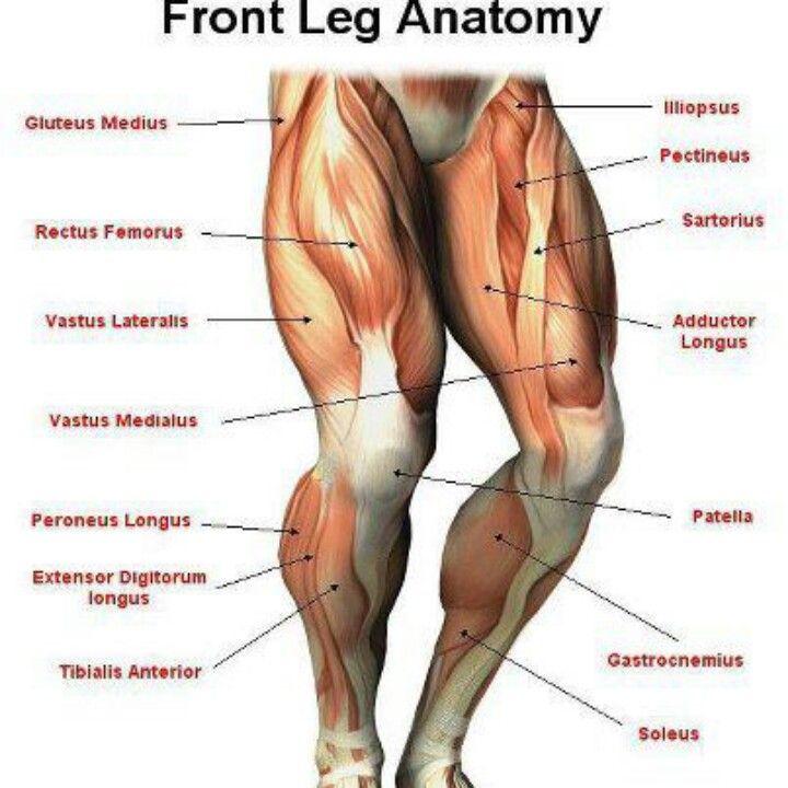 Gotta luv anatomy | pilates | Pinterest | Anatomy and Gym