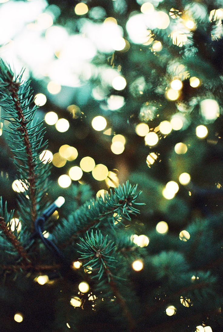 Pine Tree With Lights Wallpaper