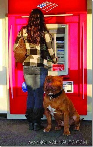 bully dog security