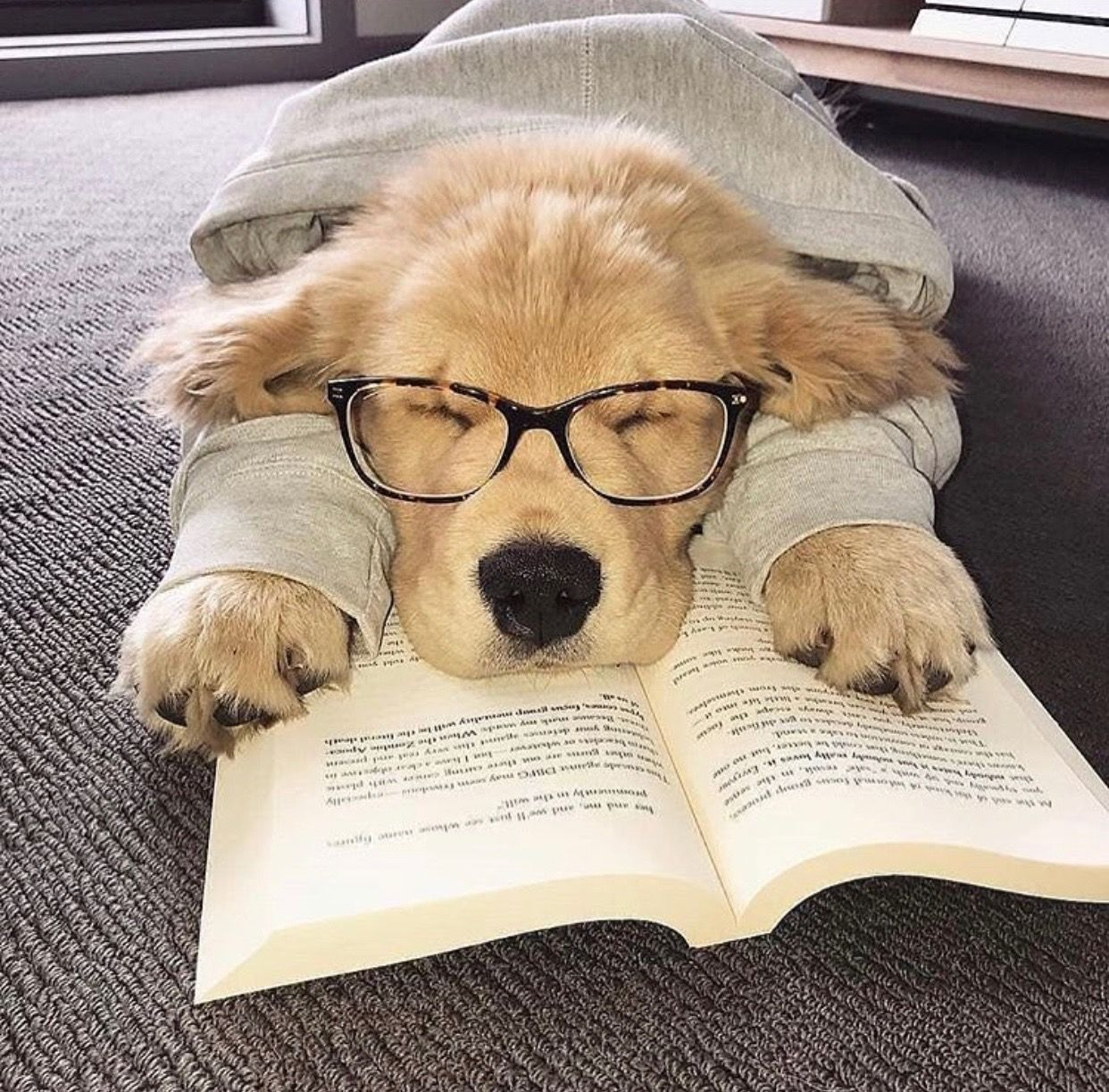 10 Astonishing Versatile Golden Retriever Ideas Cute Dogs Cute