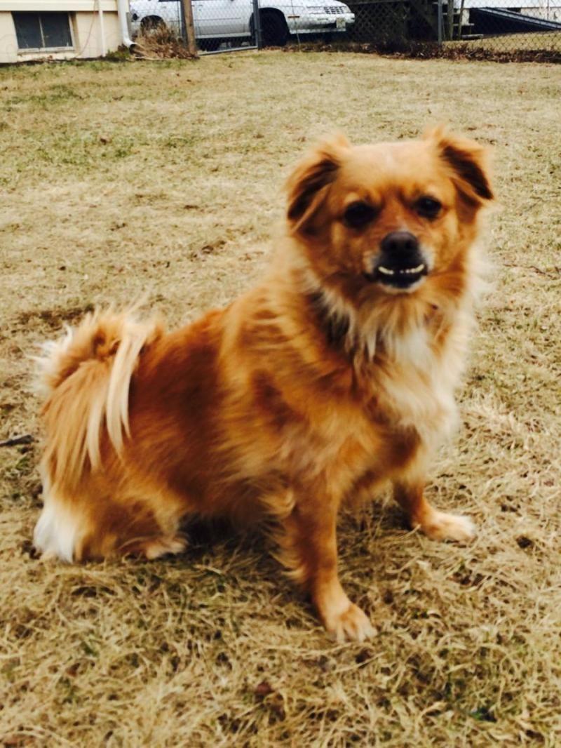 Adopt JambalayaGENTLE on Pet adoption, Pets, Dogs