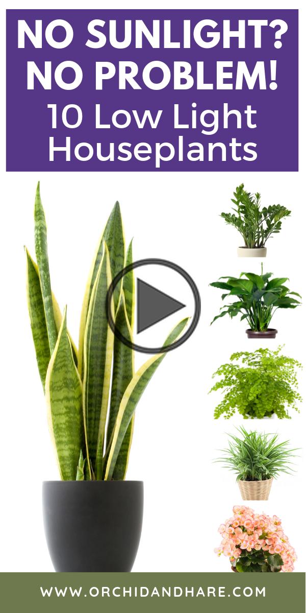 10 Low Light House Plants