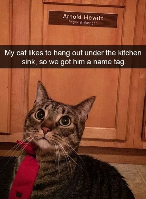 30 Cats On Snapchat With Images Funny Cat Pictures Cute Funny