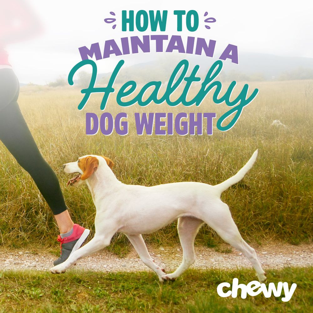 Find Out Your Pup S Healthy Weight Range And Get Tips For Helping