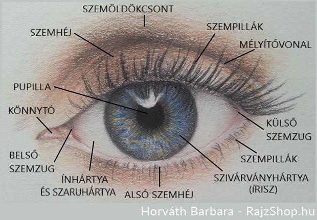 látási táplálék-kiegészítők sárgarépa látás kezelés