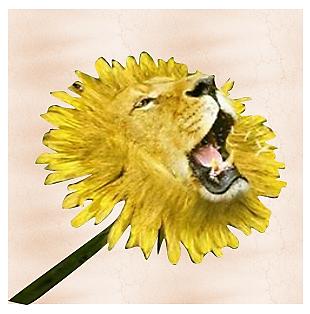 Львиный подсолнух. интер
