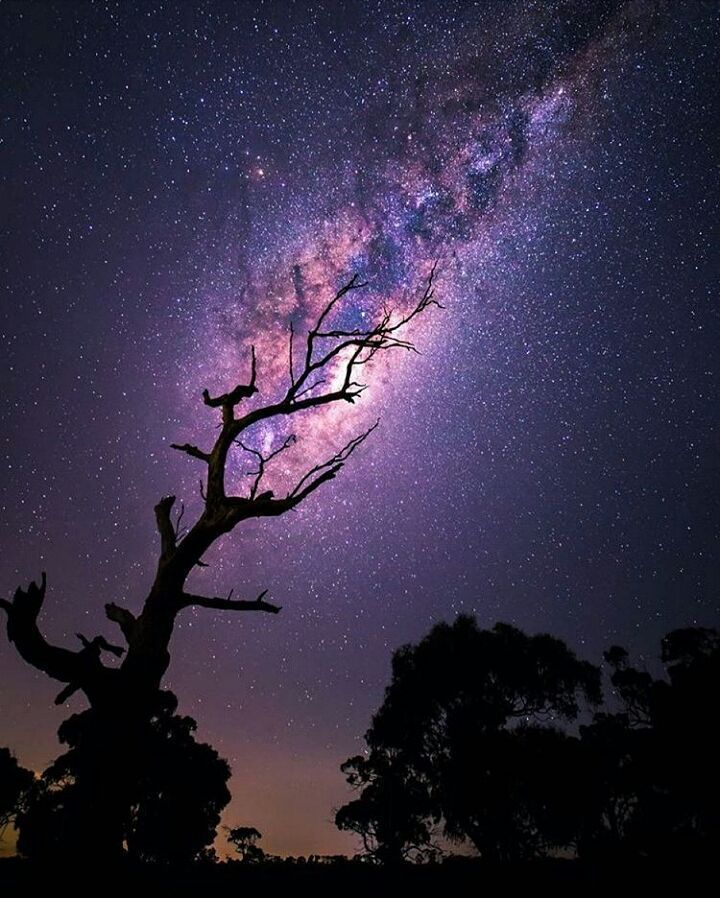 On instagram by beatrix_szlavkovszky #astrophotography #metsuke (o) http://ift.tt/1n8PBln #purple #sky #stars #night #nature #naturephotography