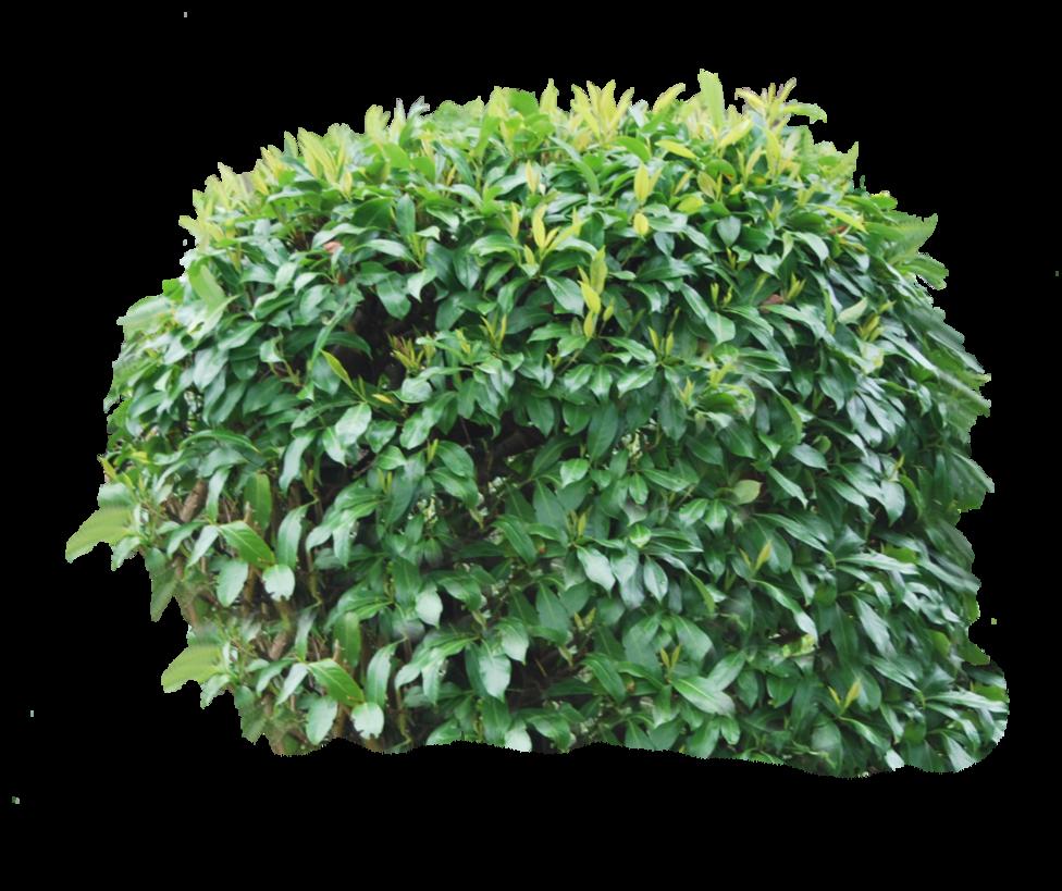 bush png image projecten om te proberen pinterest