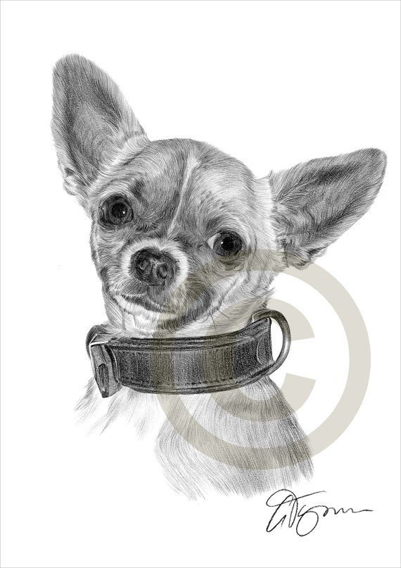 Chihuahua Pencil Drawing Print Toy Dog Artwork Signed