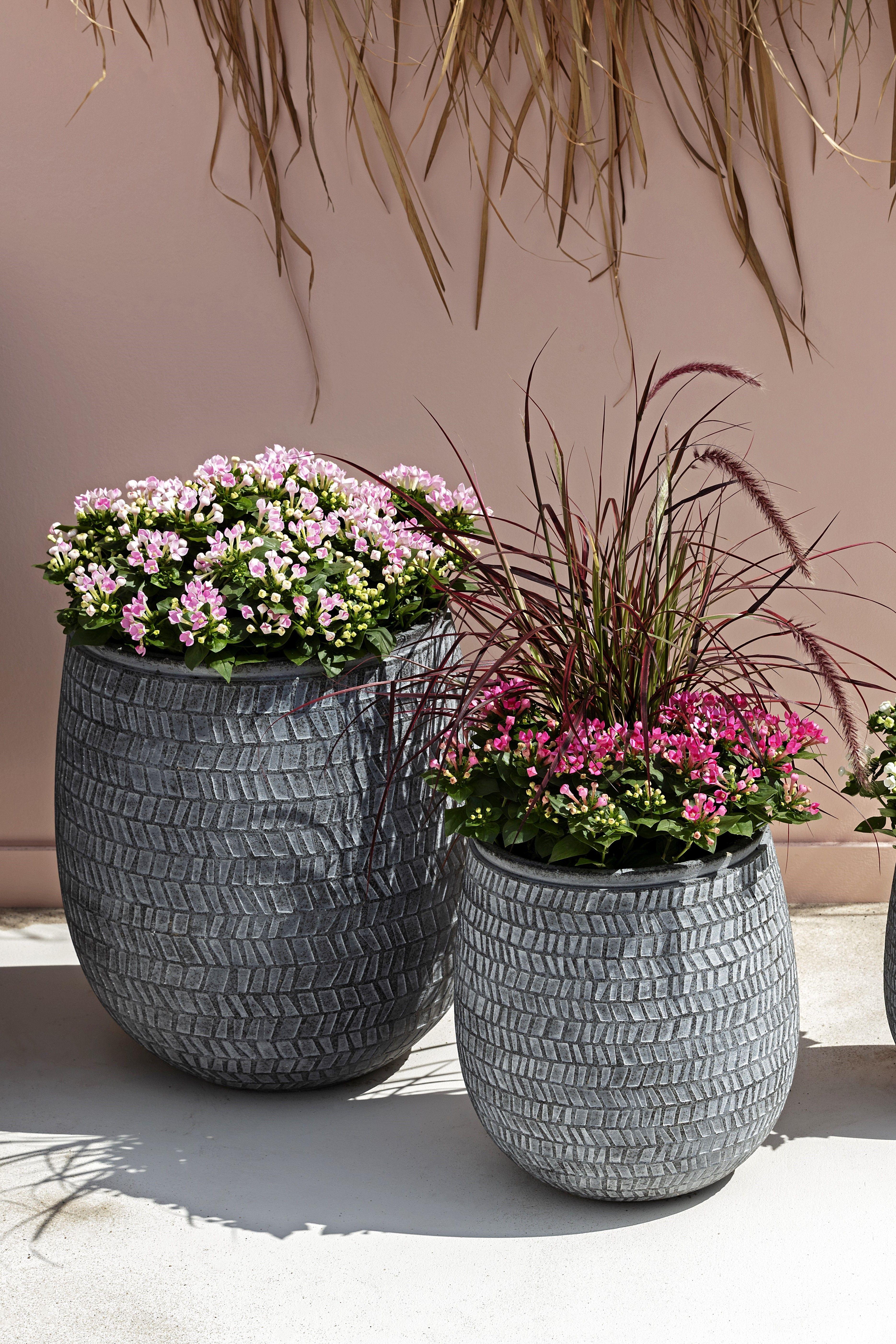 Kubelpflanzen Fur Terrasse Und Balkon Kubelpflanzen Pflanzen Leichtbeton