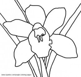 Coloring Pages Of Different Types Of Flowers. Orchid Coloring Pages Jungle