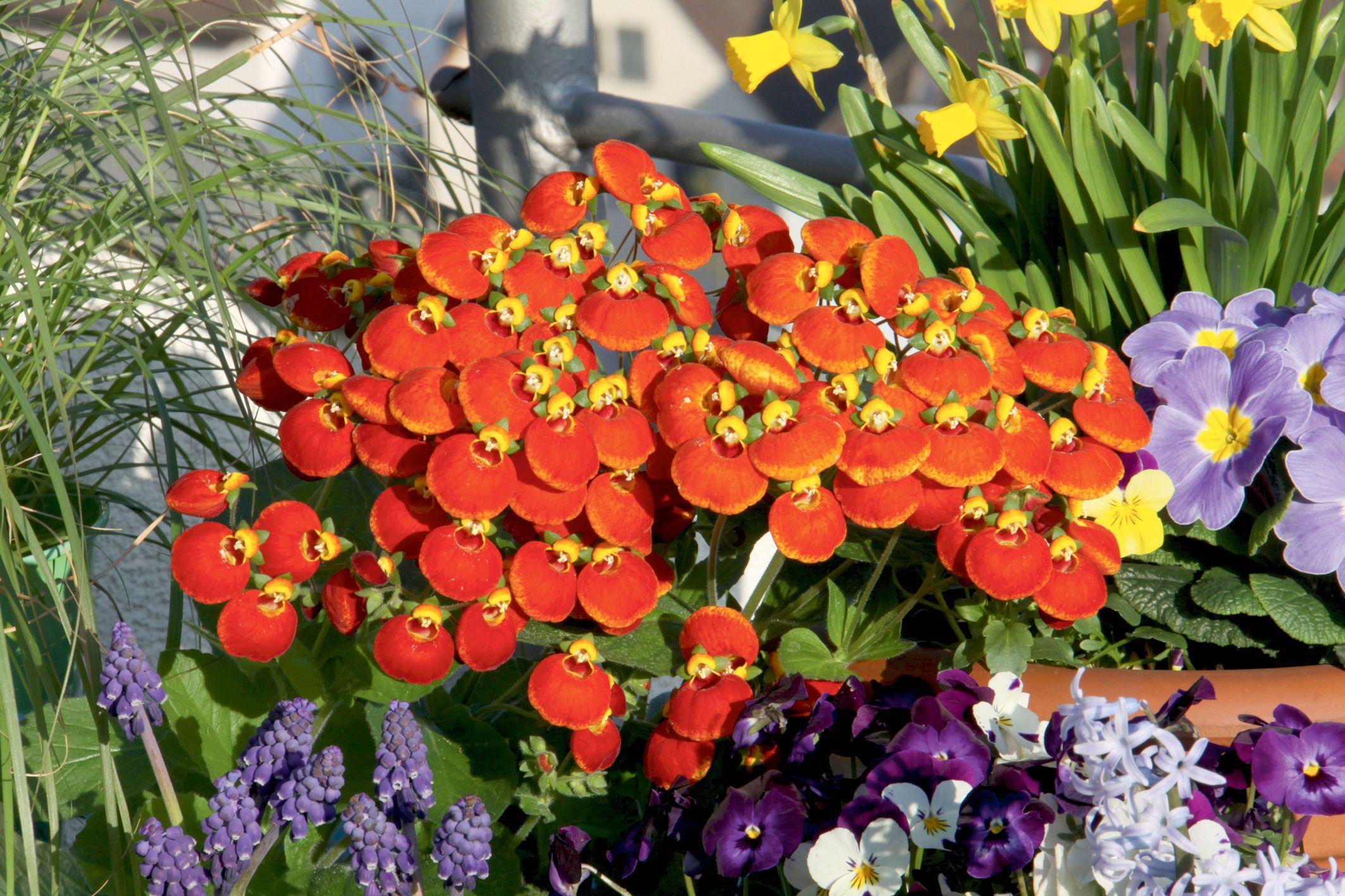 Calynopsis Die Balkonorchidee Obi Garten Blumen Wunderschöne