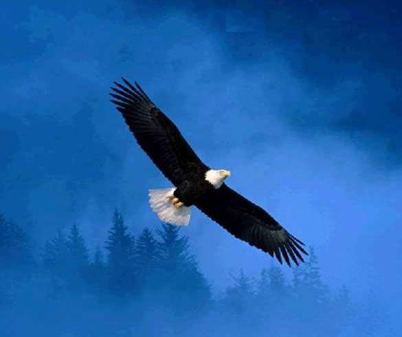 Ilustracion De Aguila Volando Sobre El Cielo Azul Animaux