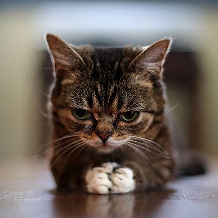 Si rezo,aparecerá un ratón?