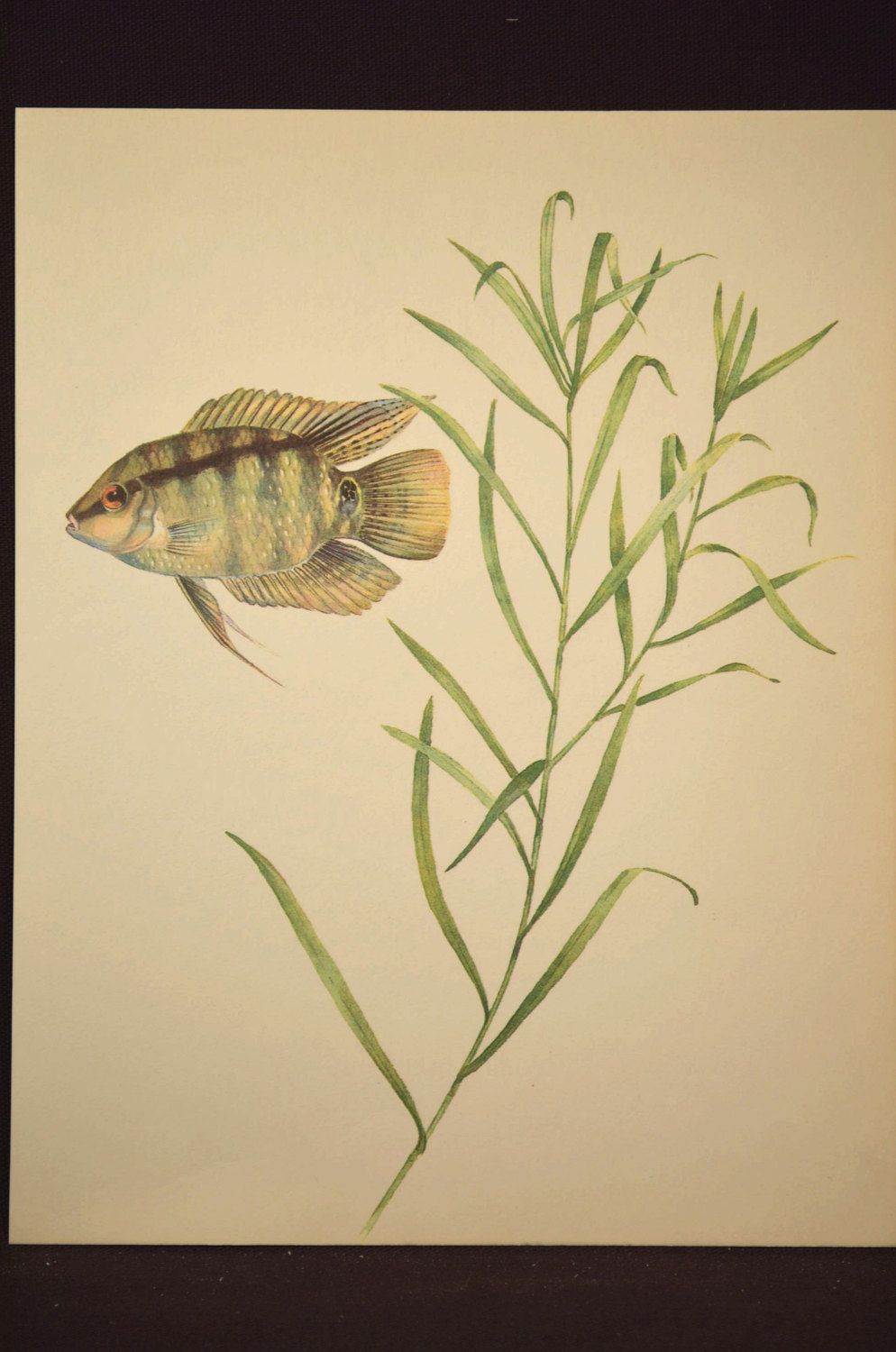 Tropical Fish Print Aquarium Fish Wall Art Decor Aquatic Plant ...