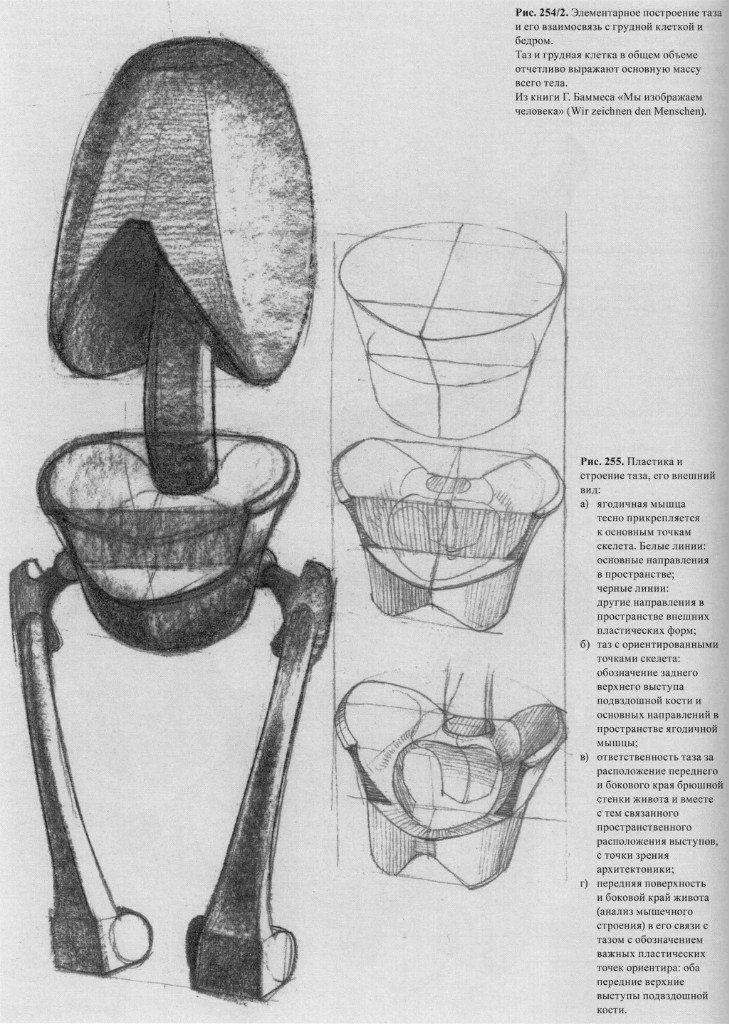 Pin von Alexandre Benites auf anatomia humana | Pinterest