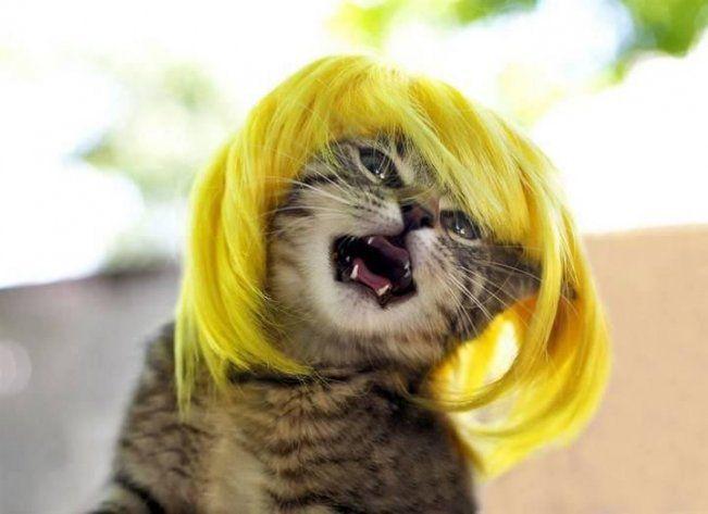 Crazy cat – 32 Photos -             // < ![CDATA[  // < ![CDATA[ (adsbygoogle = window.adsbygoogle || []).push({});  // ]]>                // < ![CDATA[  // < ![CDATA[ (adsbygoogle = window.adsbygoogle || []).push({});  // ]]>