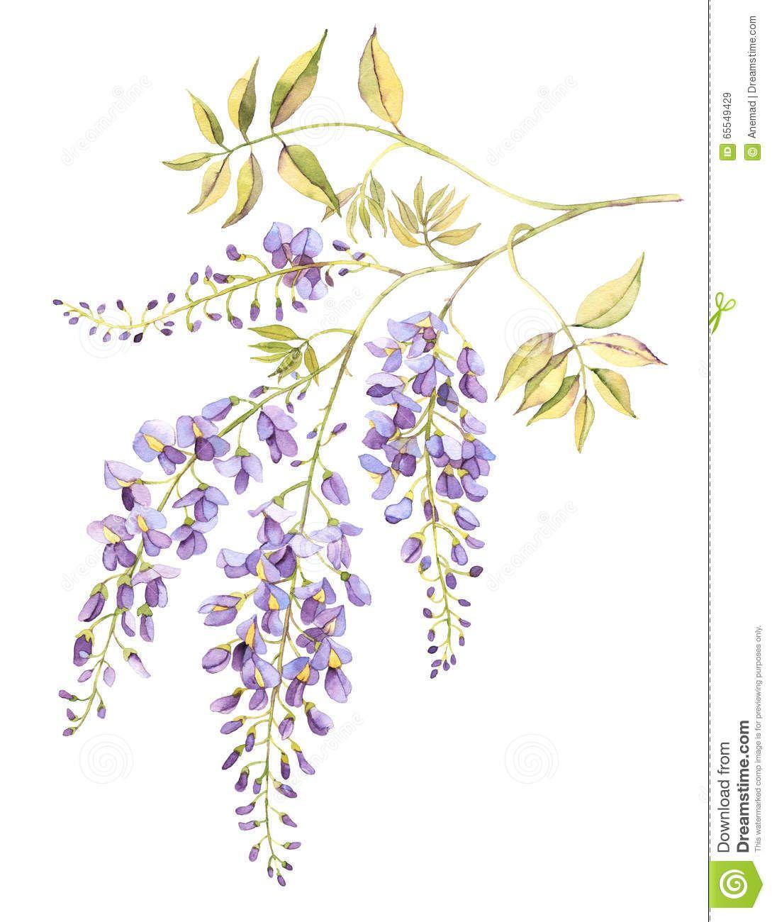 Immagine correlata | Шаблоны | Дерево глицинии, Рисунки ...