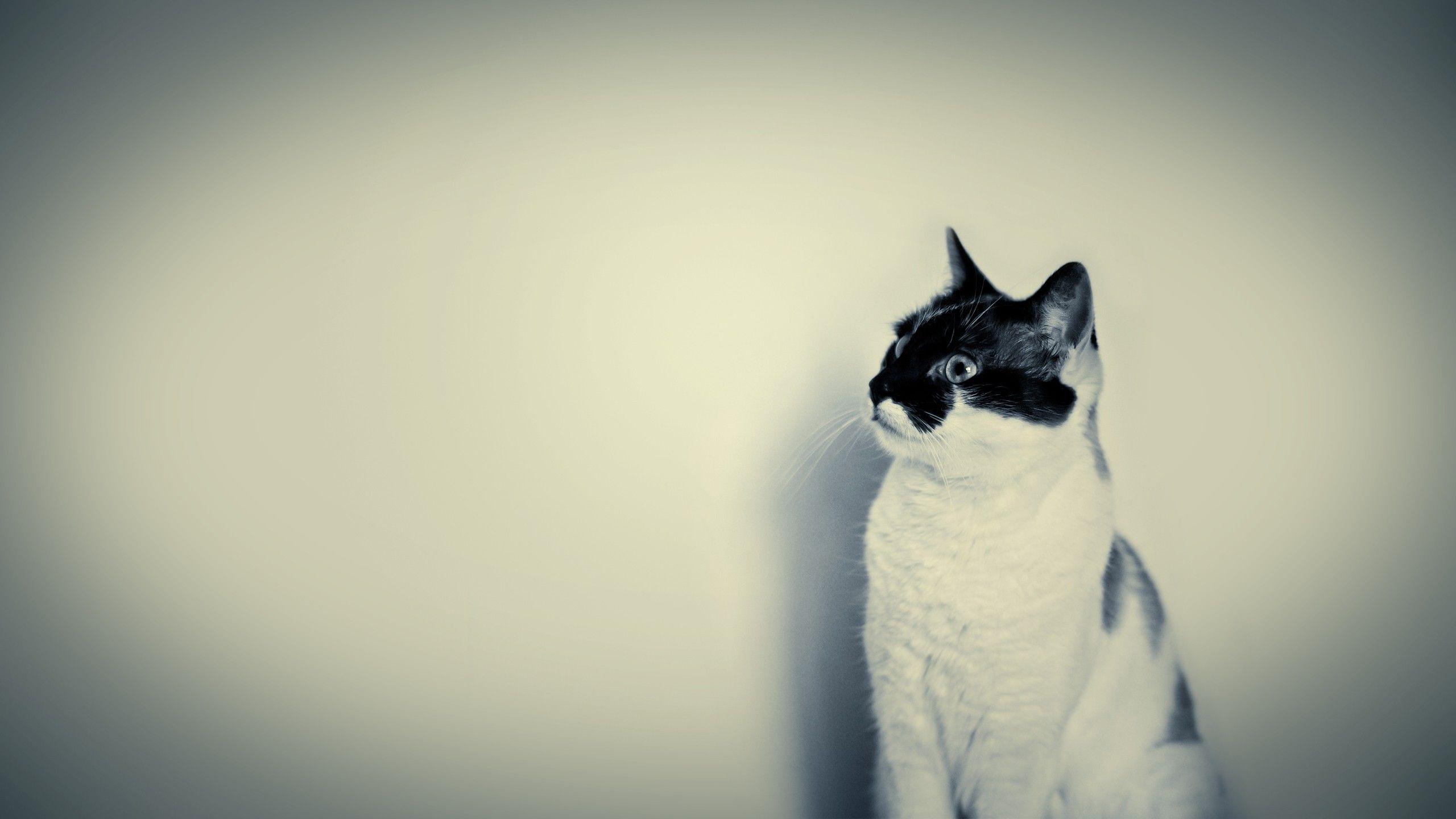 Gatto Bianco Cover per iPhone