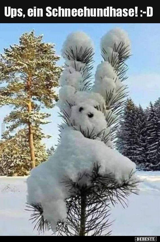 Ups, ein Schneehundhase! :-D.. | Lustige Bilder, Sprüche, Witze, echt lustig
