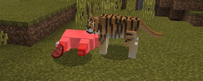 Tiger Add On For Minecraft Pe Minecraft Minecraft Pe Types Of