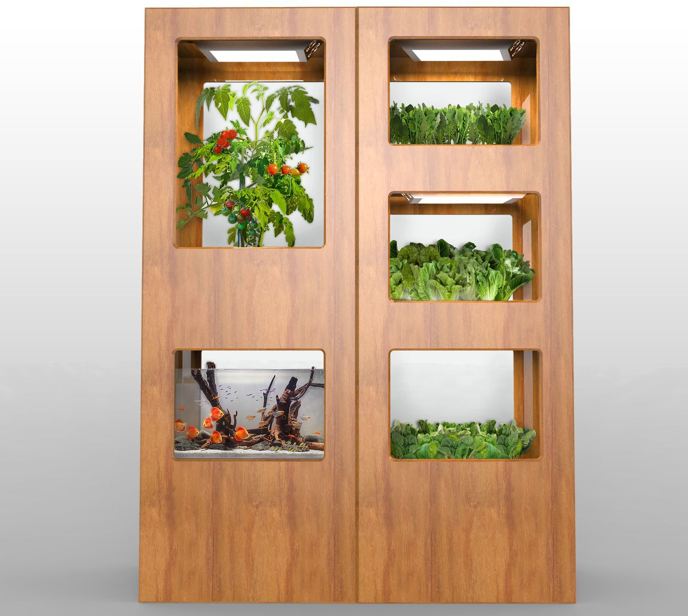 Grove labs wants to put a tiny farm in your kitchen the for Hydroponic garden with fish