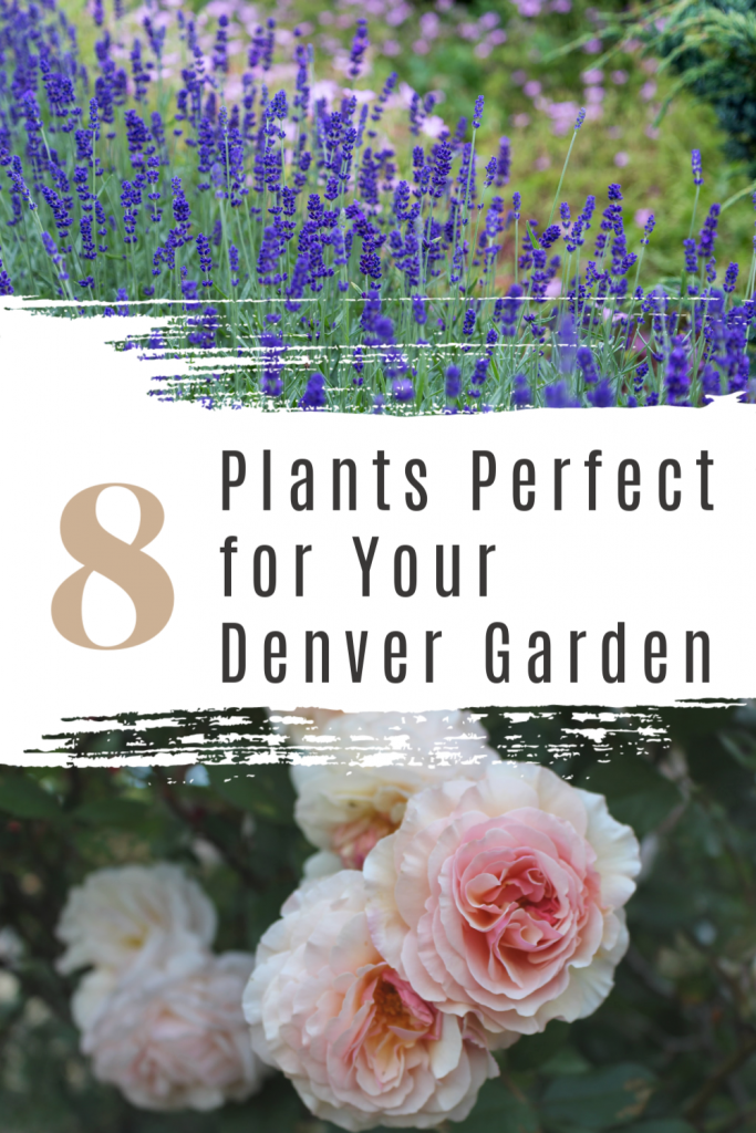Best Denver Colorado Garden Plants Colorado Gardening Colorado