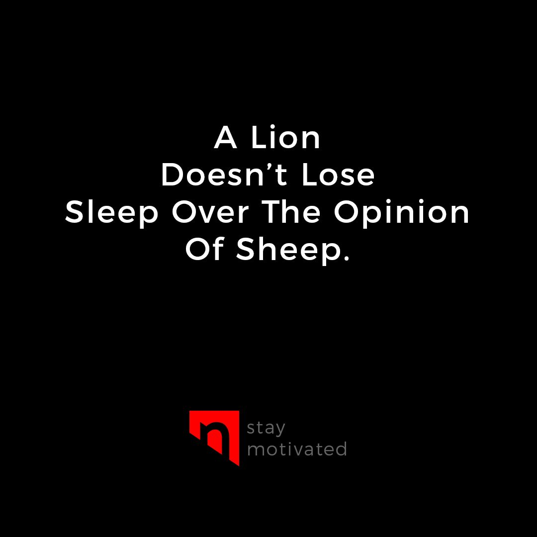 A Lion Doesn T Lose Sleep Over The Opinion Of Sheep Stay