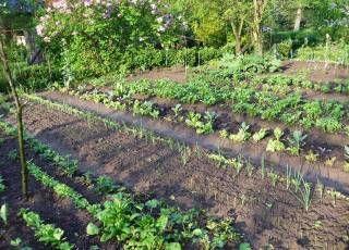 Konkreter Gemüse-Anbauplan, Skizze der Beetaufteilung :-)