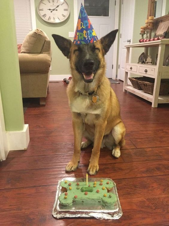 German Shepherd Smiling Happy Birthday Dog Smiling Dogs Dog