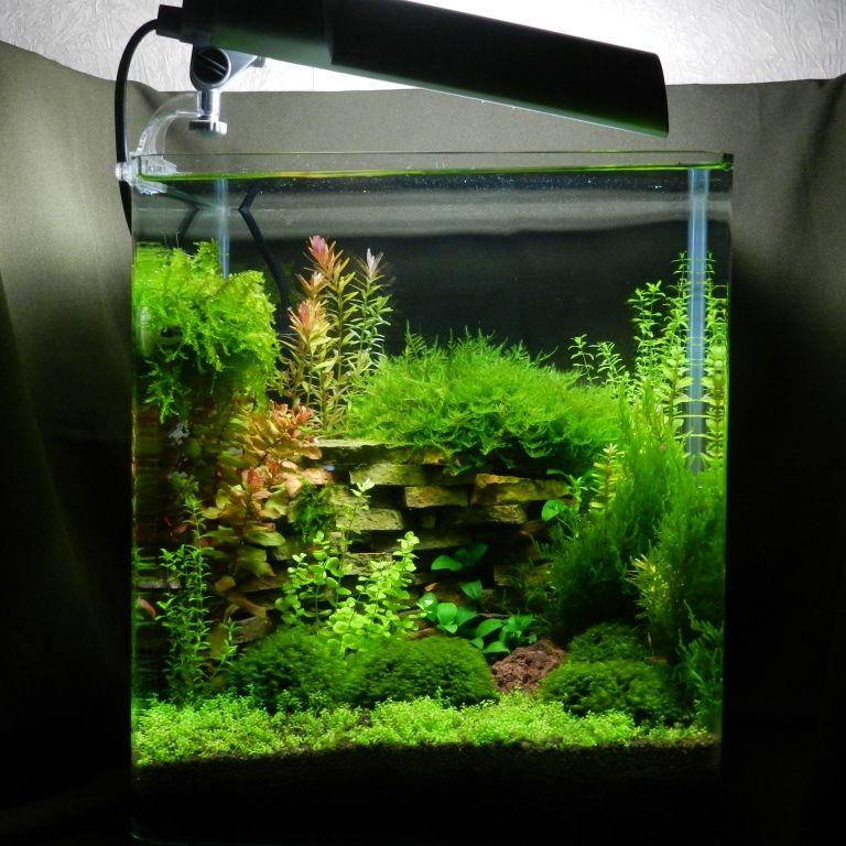 nano cube contest 2013 freshwater aquarium pinterest cube aquariums and freshwater aquarium. Black Bedroom Furniture Sets. Home Design Ideas
