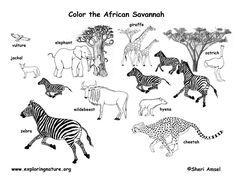 kenya animal coloring pages | African animals #habitat #biome #savanna colouring page ...