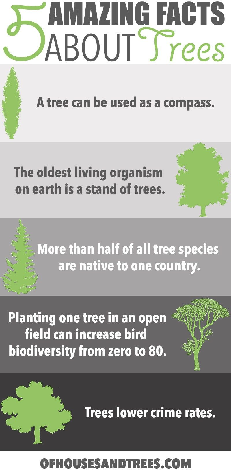 Amazing Facts About Trees Five Amazing Facts About Trees Did You Know A Tree Can Be Used As A Compass Fight Facts About Plants Fun Facts Environment Facts