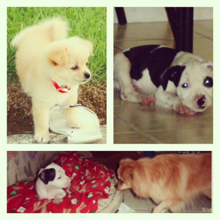 When they were both babys and there first time meeting