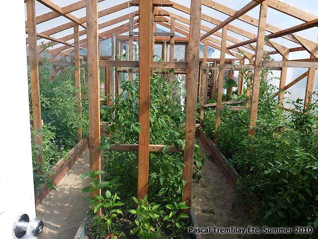 Cultiver Des Tomates De Serres Serre En Bois Serre En Verre