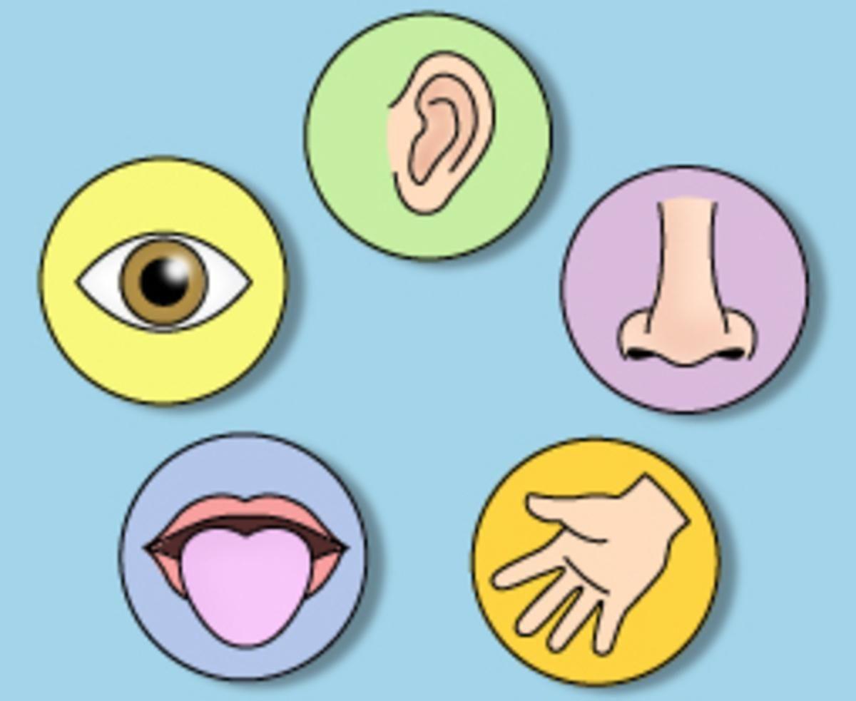 My Five Senses Matchup Udsk233 Telo