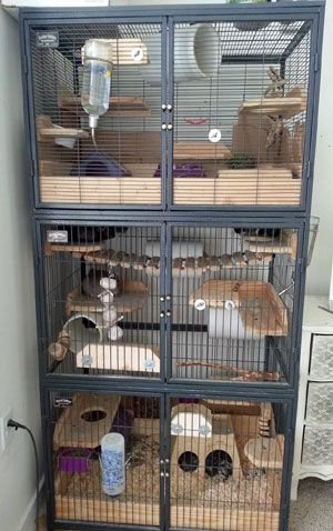 Triple Chinchilla Cages Farbratten Frettchen Degu