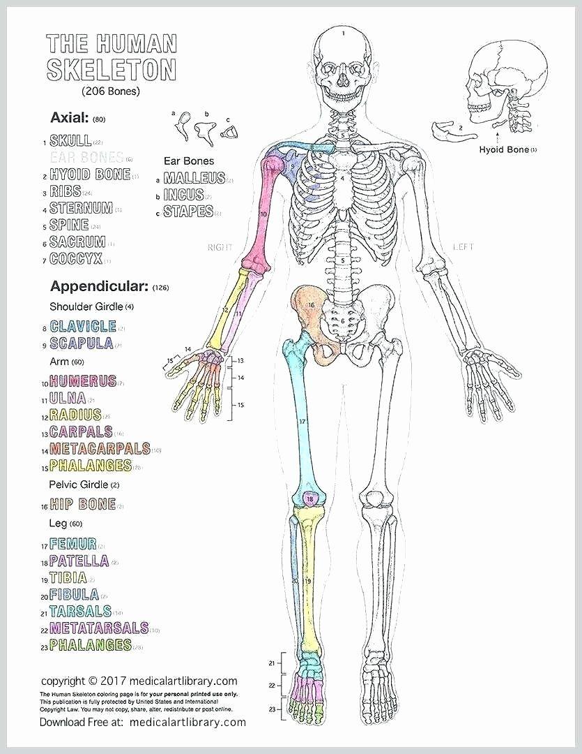 Human Anatomy Coloring Book.pdf : human, anatomy, coloring, book.pdf, Human, Anatomy, Coloring, Drawing, Download, Diagram,, Book,