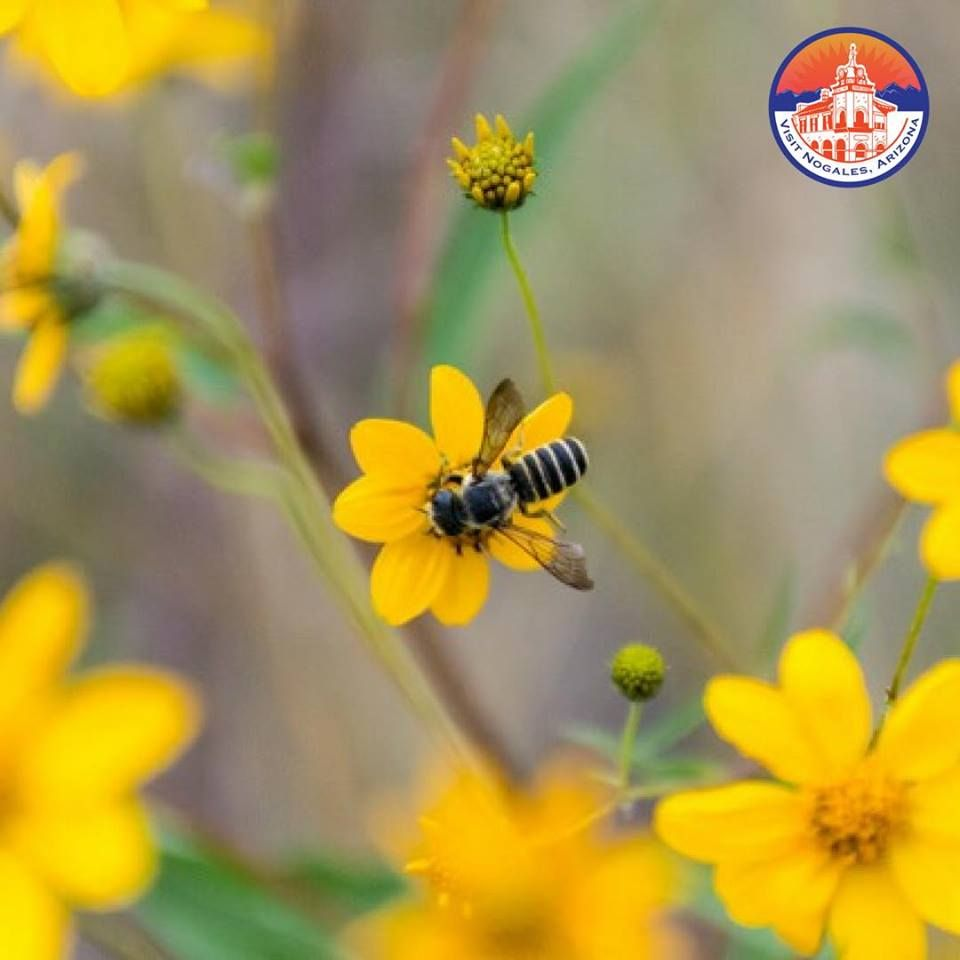 💐🌼🌻🐝Happy first day of Spring! 🐝🌻🌼💐 We couldn't think of a better time to enjoy the beautiful weather and landscapes of #SouthernArizona than this spring season. Make your escape to #SantaCruzCounty today! PC: @preciousdreamsaz #FirstDayOfSpring #SpringTravel #TravelArizona #VisitNogalesAZ
