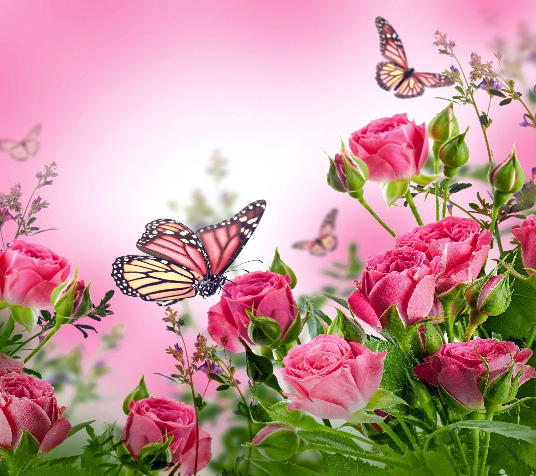 Pink Butterfly Wallpaper: Butterflies Desktop Background Wallpaper Free