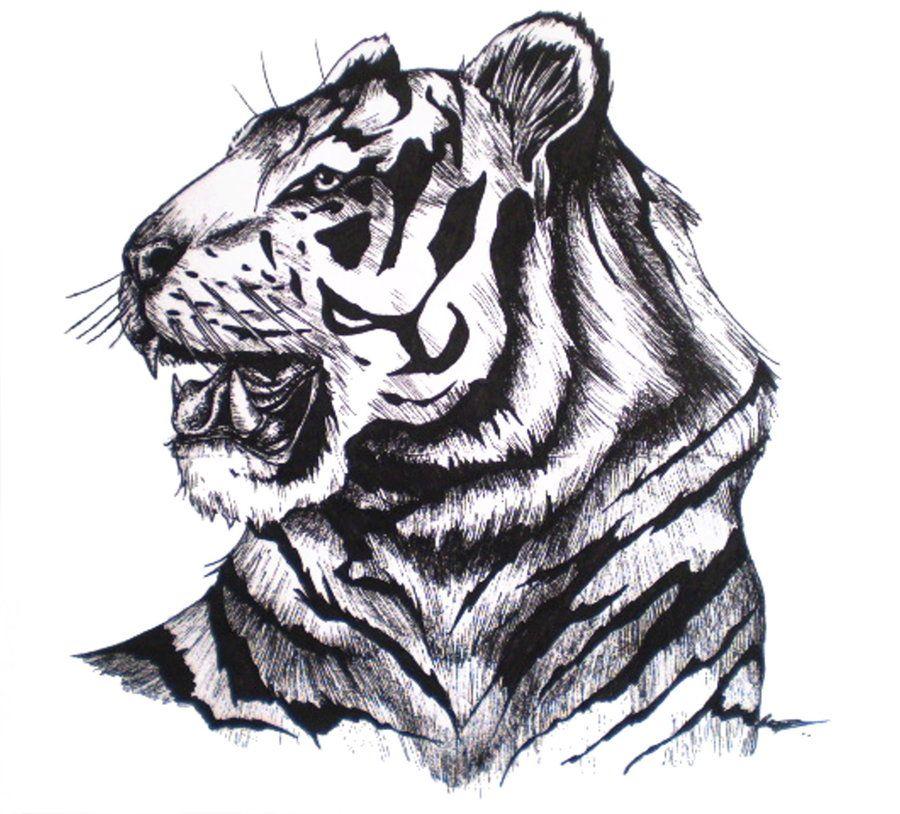 Тигры рисунок черно белый