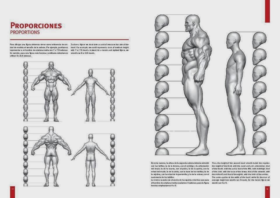 Anatomia do herói Corpo Martin Canale | Art reference | Pinterest
